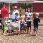petting zoo2