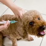 clinic-vaccine
